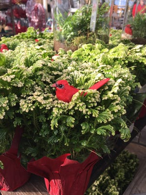 Frosty Fern's naturally white-tipped branches, topped with a red bird, add easy-care holiday fare.
