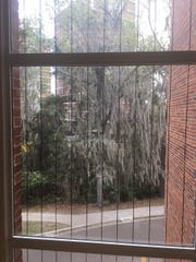A new window treatment at University of Florida prevent birds from crashing into the window.
