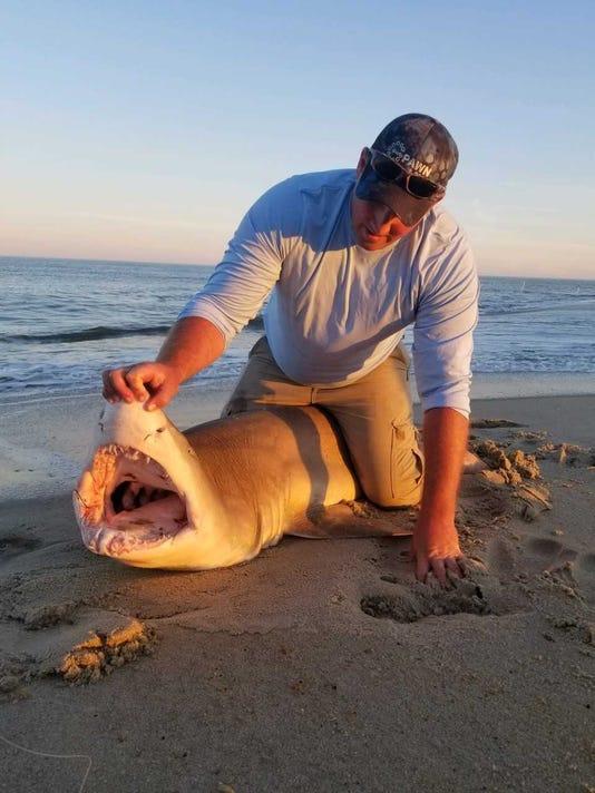 636646632619209610-Shark-1.jpg