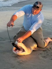 Jason Allen, of Fredericksburg, handles a nurse shark he reeled in at the southern tip of Assateague Island Thursday evening. The non-aggressive species usually dwells on the ocean floor during the day, coming out at night to hunt for fish, but they will eat crustaceans and squid as well, according to National Geographic.