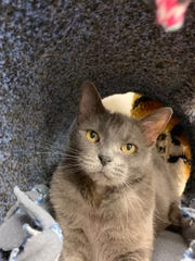 Stormy is available for adoption at 10807 N. 96th Ave.