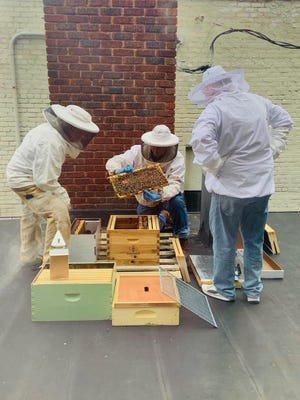 Hives on the roof of The Henderson.