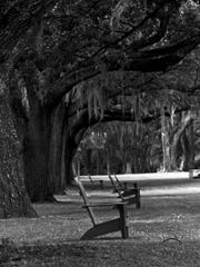 """William Mertins pays a visit to the swamp with """"Black and White Chairs."""""""