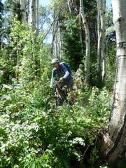 Park City has diverse terrain, but probably none prettier than the vast stands of aspen trees, which will turn brilliant gold in the fall.