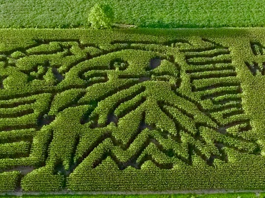 Goebel Farms' corn maze this year is the American Flag with an eagle.
