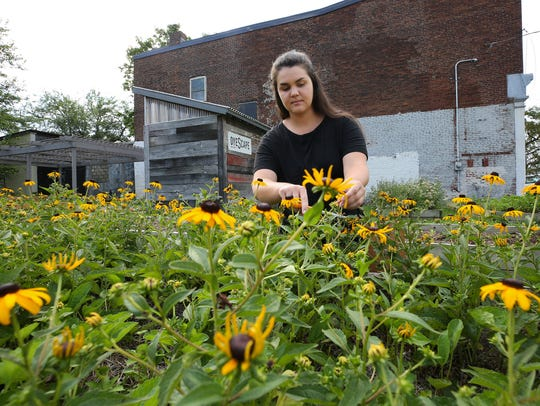 "Brent Drew-Wolak clips ""Black-Eyed Susans"" at the DyeScape flower garden in Portland."