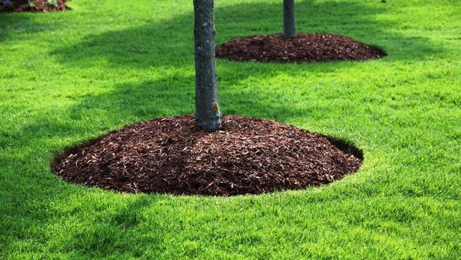The right mulch actually builds your soil, encouraging feeder root growth in trees and shrubs. The wrong mulch harms your plants.