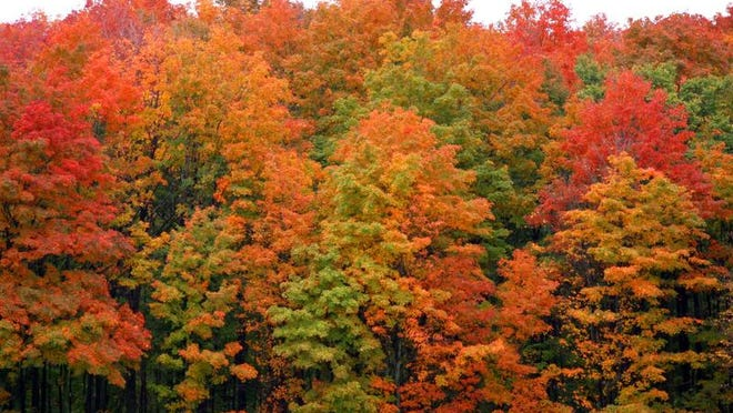 Fall colors in 2013 along M-32 west of Gaylord.