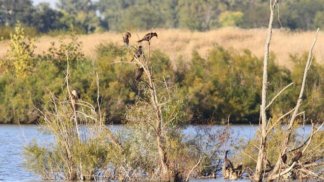 The lake along the Marion Tallgrass Trail, just east of Herr Road, attracts various wildlife.
