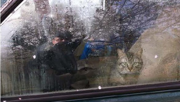 One of 41 cats is seen in the vehicle owned by a woman arrested on charges of animal abuse.