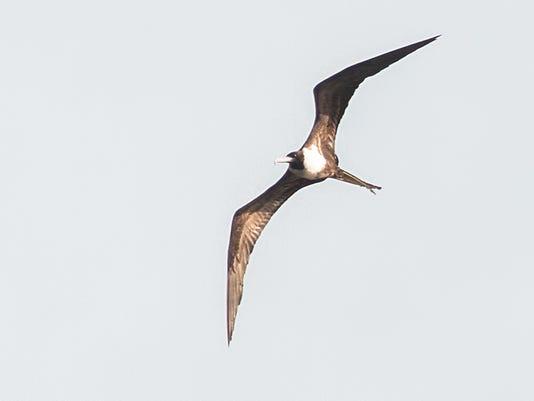 MJS-hurricanebirds26p1