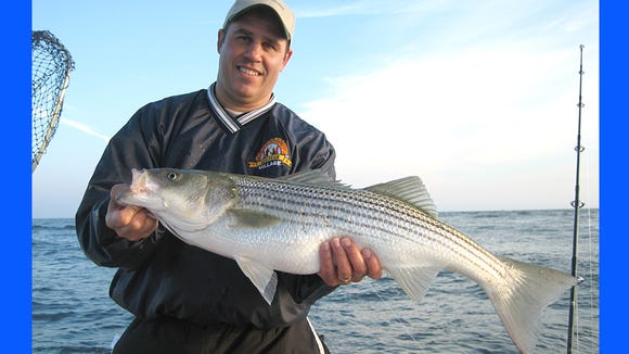 Ed Reilly of Bridgewater with a nice striper he caught on board the Hi Flier out of Barnegat.