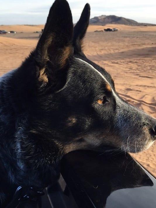 Pet Portraits: Cody