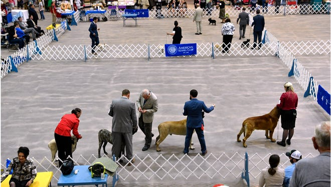 Handlers show their dogs during the Abilene Kennel Club's 60th annual dog show May 19, 2018.