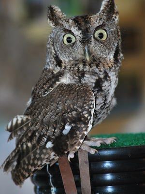 Join Leslie Science & Nature Center on a night hike in the woods and learn about the lives and habitats of local birds during the Owl Prowl.