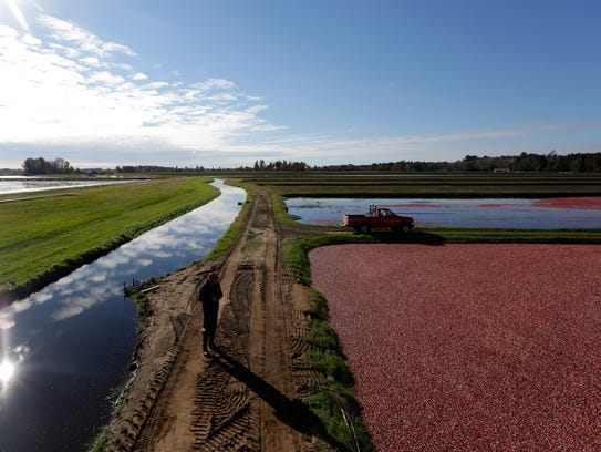 Clouds on one side, cranberries on another, a man navigates
