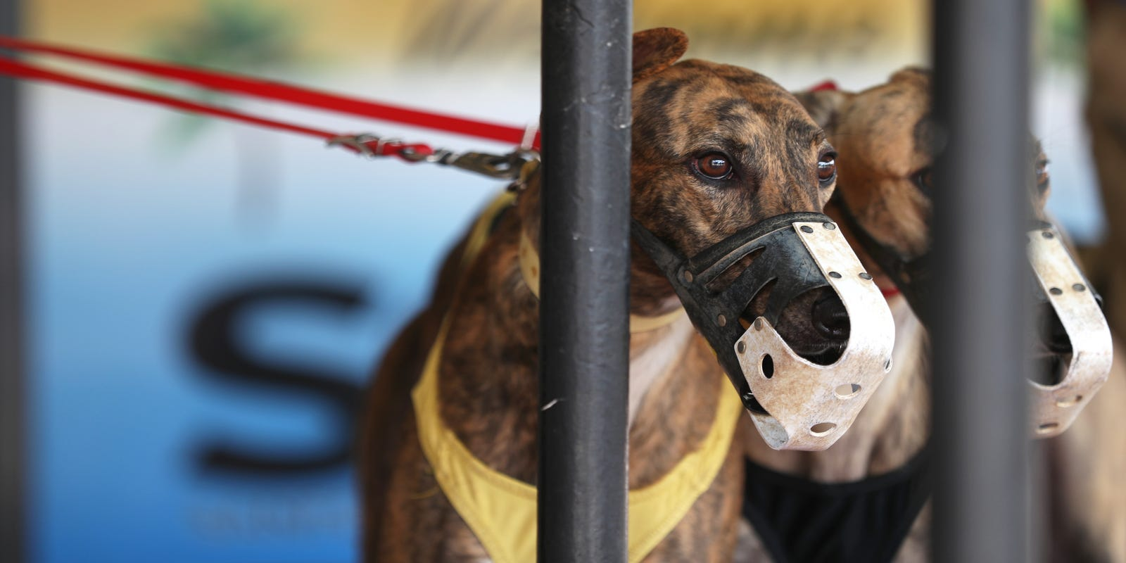 Dog track betting terms fade