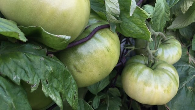 No need to be intimidated if you're new to gardening. Two upcoming classes are just for beginning vegetable gardeners.