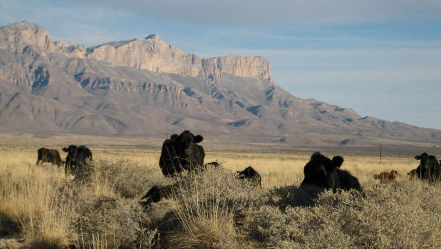 A view of one of the four portions of the CL Ranch in Dell City that abuts against the Guadalupe Mountains.