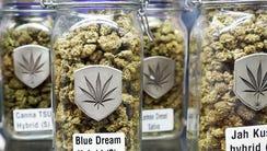 Jars of state-legal marijuana sit inside a cannabis