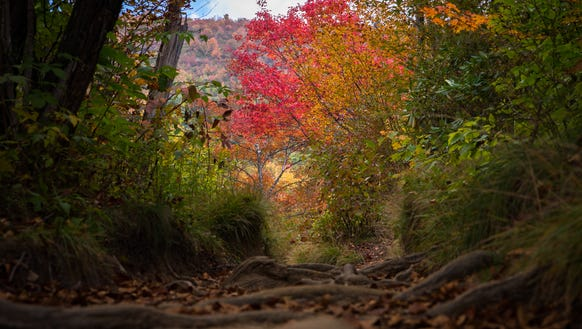 Vibrant color on a trail at Graveyard Fields on the
