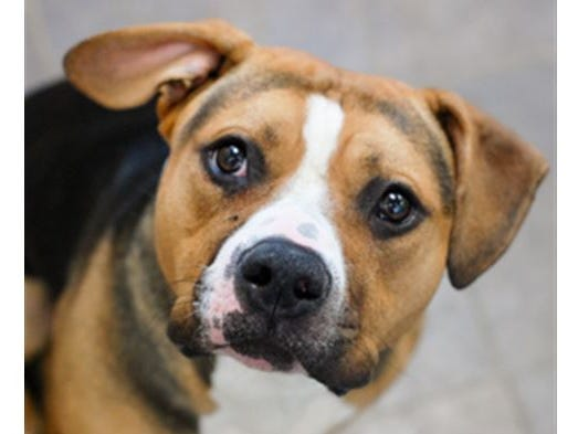 The Des Moines Register and the Animal Rescue League of Iowa are excited to introduce you to Roman!