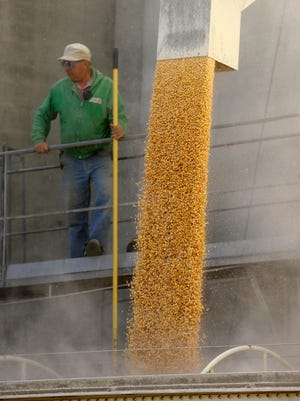 Elevator employee Dennis Black loads corn into a trailer for area farmers at the North Iowa Cooperative on Monday, Oct. 7, 2013, in Thornton, Iowa.
