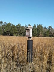 Bluebid nest box with racoon/snake guard.