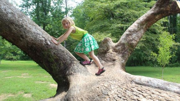 Bernheim wants to break a tree-hugging record.
