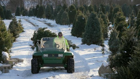 Kevin Kleer of Kleerview Farm transports a Christmas tree on their farm in Bellville.