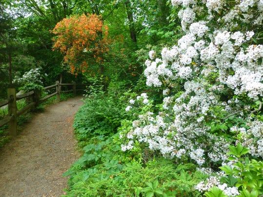 Botanical Gardens Asheville May 2015 01