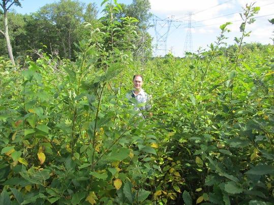 John Cecil in 2015 in 2012 harvest area