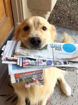 Our 3-year-old golden, Carver, fetches the paper for us every morning. You can just see the tip of his tail wag in the photo; it's part of the service!