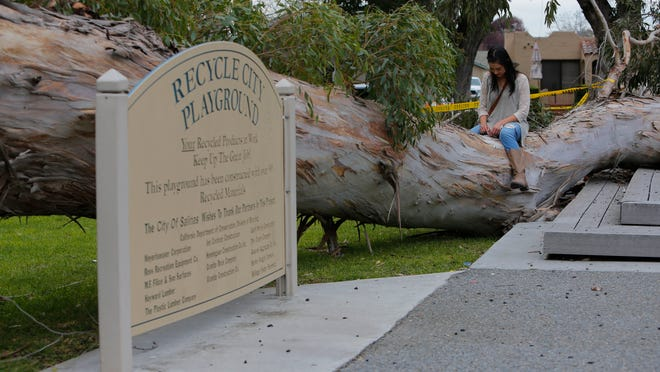Lori Trujillo and Leo Ortiz (not pictured) check out a fallen tree near Recycle City Playground at Central Park in Salinas. The tree fell feet from the playground.