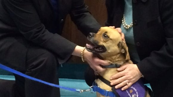 Hank the therapy dog from Gabriel's Angels.