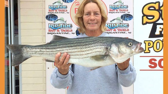 Linda D with a nice striper she landed in the Brigantine surf.