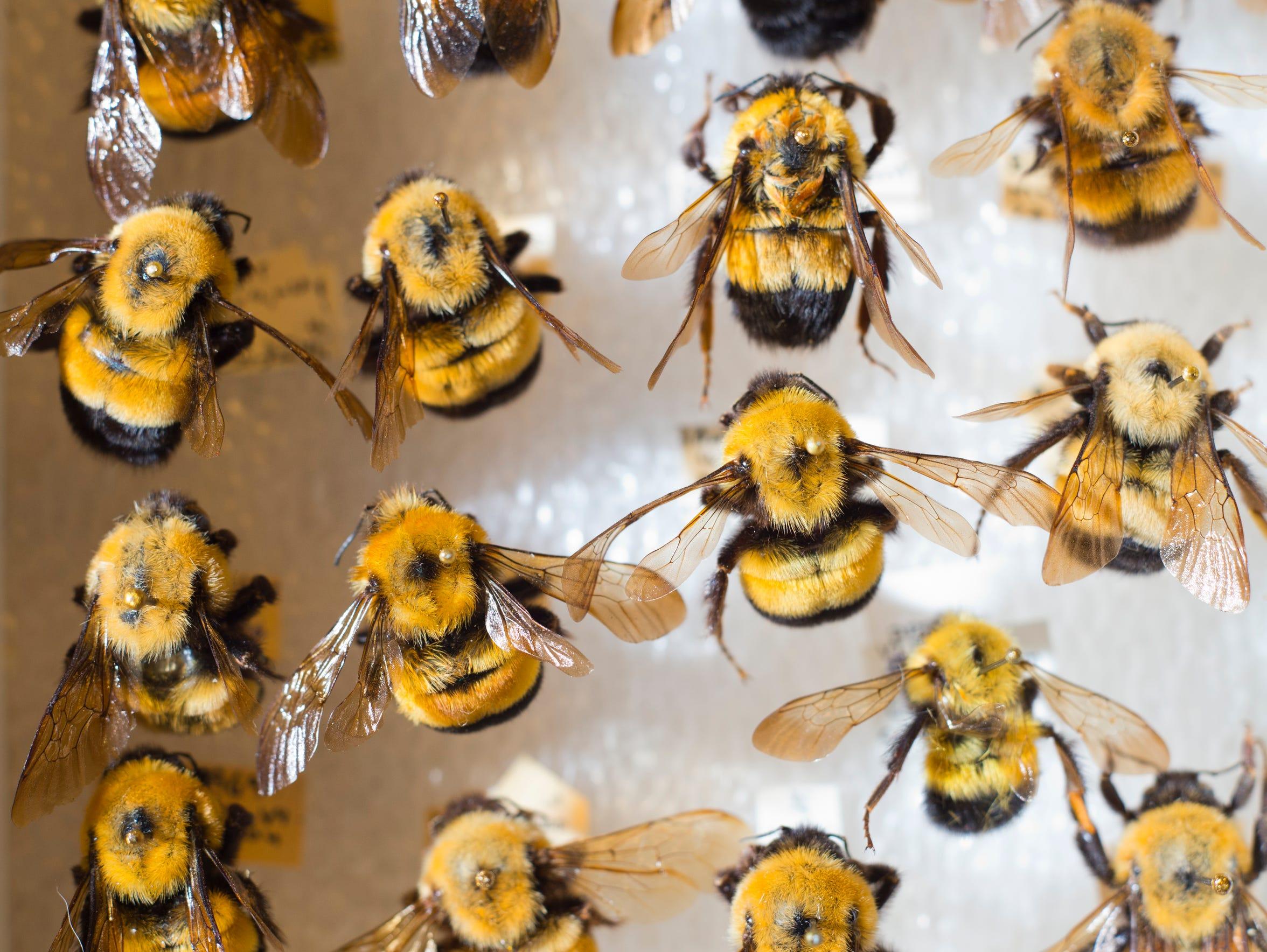 BUR 0826 bees 5.jpg