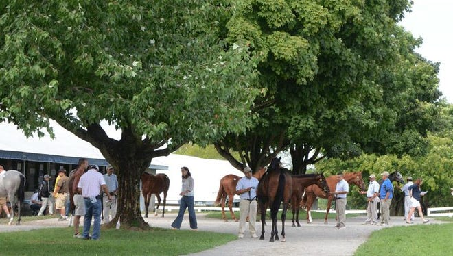 Buyers view potential purchases before the Keeneland September Yearling Sale that begins on Monday.