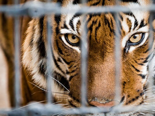 Commentary: Don't let a stop at a roadside zoo spoil your trip