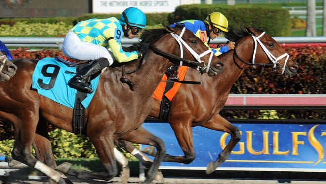 Starlight Racing's Itsaknockout edged stablemate Old Mountain Lane to win his Dec. 7 racing debut at Gulfstream Park.