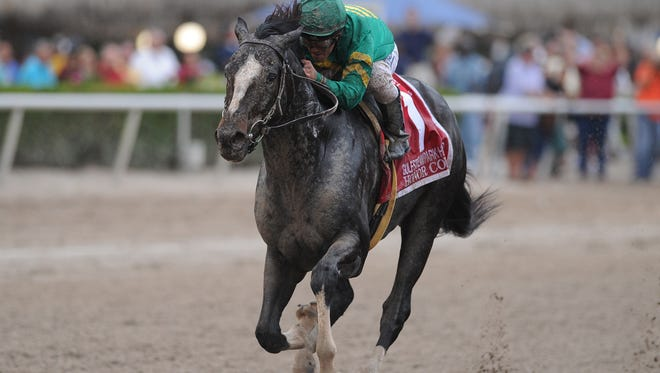 Honor Code won the Gulfstream Park Handicap earlier this year.