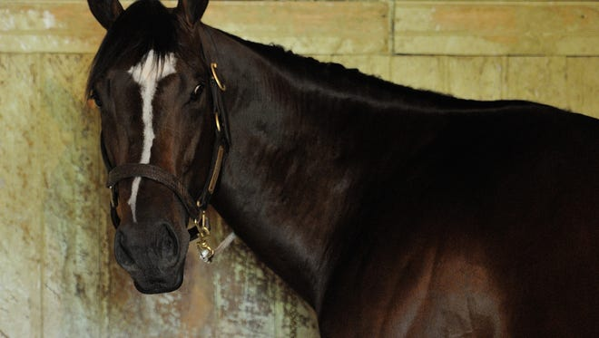 Materiality hangs out in his stall Sunday at Belmont Park.