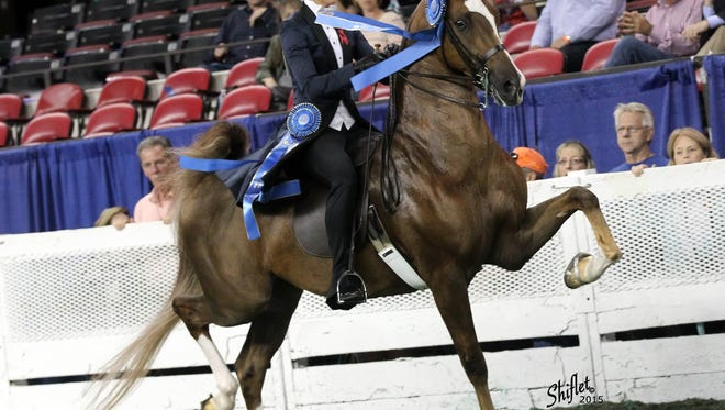 Macadamia and rider Mary Jane Glasscock Fitzgerald won Monday night's ladies amateur three-gaited championship at the Kentucky State Fair's World's Championship Horse Show in Freedom Hall.