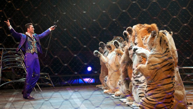 Alexander Lacey, cat trainer with Ringing Bros. and Barnum Circus, performs with the show when it plays in Greenville's Bon Secours Wellness Arena Feb. 3-7.
