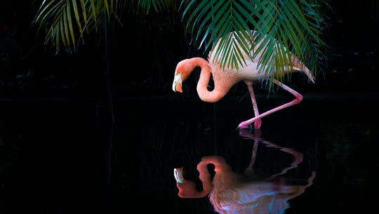 A flamingo walks along the water during flamingo yoga