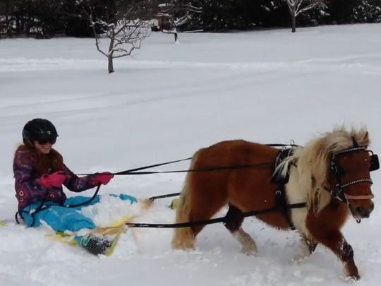 Camille Beatty glides through the snow hitched to her miniature horse.