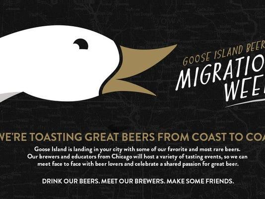 goose-migration-week