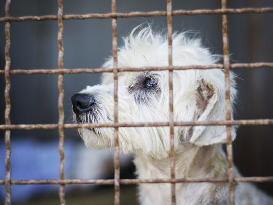Sutton County is continuing to see dogs dumped off of Interstate 10.