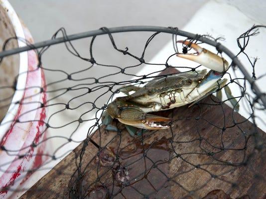 CHL 0808 Crabbing