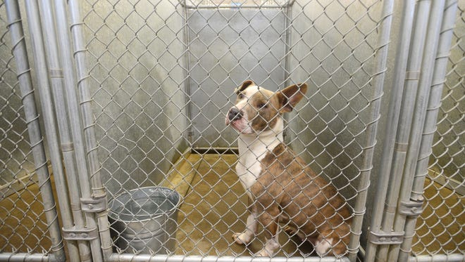 A dog looks out of its cage at the Muskingum County Dog Pound.
